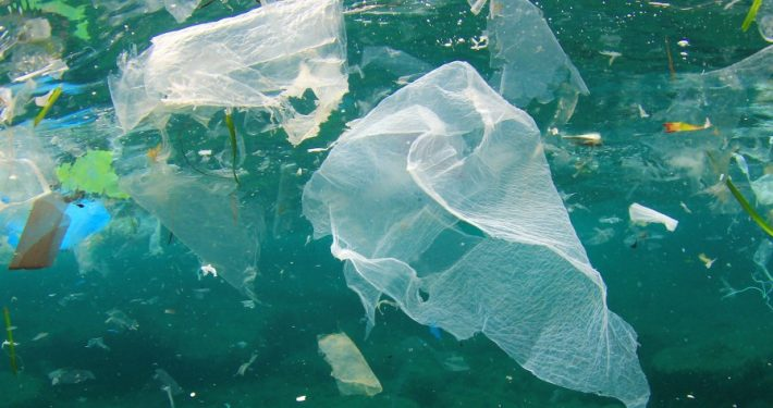 Biodegradable Plastics Were Not Designed To Be A Solution To Marine Litter